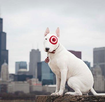 white terrier dog with red bullseye around eye poses in front of Chicago building skyline
