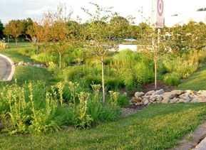 An example of a rain garden in front of a Target store