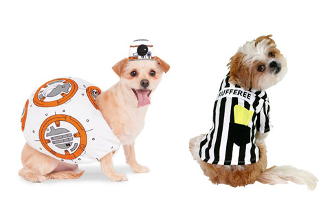 Dogs pose in BB8 and Rufferee costumes.
