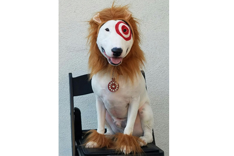 Bullseye the dog poses in a lion costume.  sc 1 st  Target Corporate & Howl-oweenu0027s Anything But Tame with Targetu0027s Cute Pet Costumes