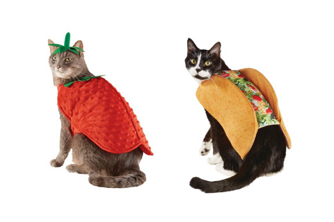 Cats pose in strawberry and taco costumes.