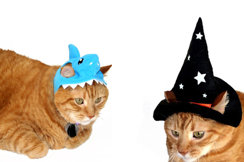Cats pose in shark and witch hats.