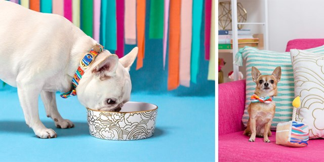 Two dogs show off Oh Joy's new pet pieces: a gold-rimmed dish and colorful accessories.