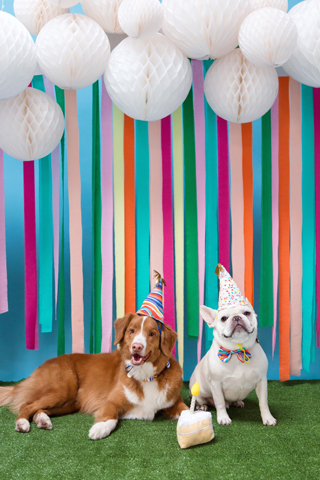 Against A Backdrop Of Colorful Party Streamers Two Dogs Wear Birthday Hats And Bowties While
