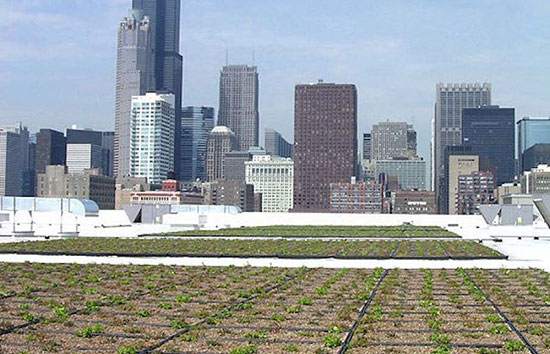 Closeup of green roofs in Chicago