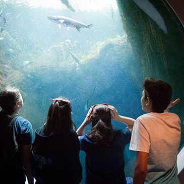 Kids look into an aquarium talk filled with fish.