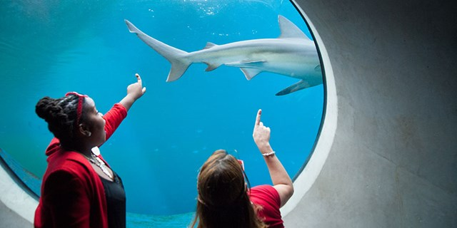 Two students point at an aquarium window where a shark is swimming by
