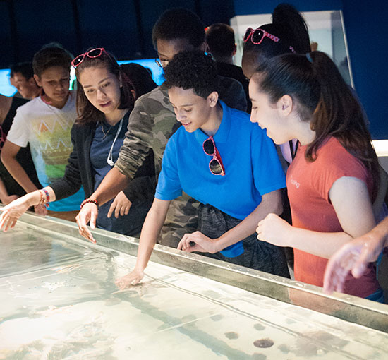 Students pet stingrays in the touch tank
