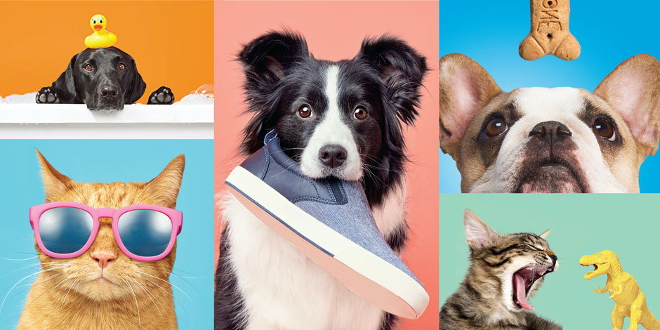 A variety of color blocks featuring fun images of cats and dogs