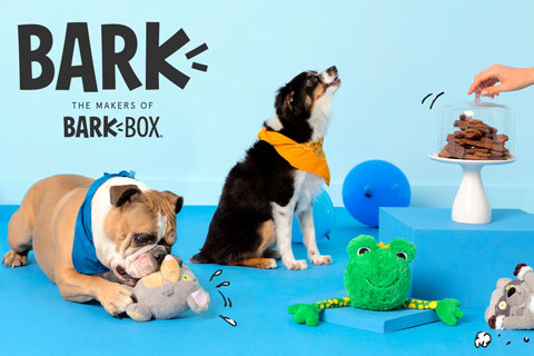 Two dogs wearing bandannas play with BARK toys