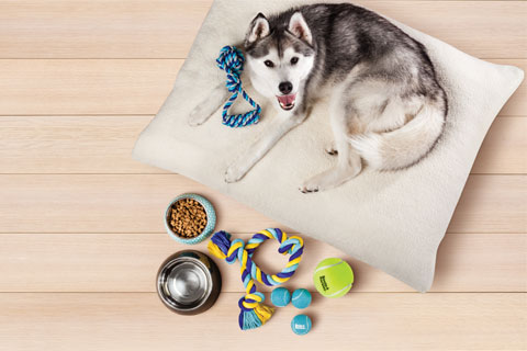 A dog relaxes on a dog bed, near a pile of toys and food and water dishes.