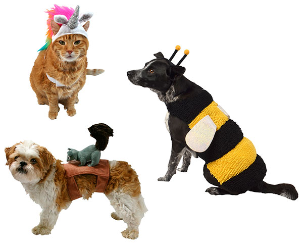 Pets in animal costumes