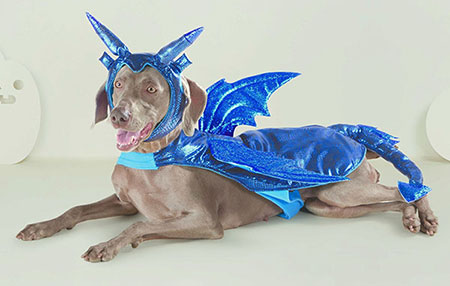 A large dog wearing a blue dragon costume