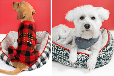 Two dogs relax in cute dog beds, while wearing accessories