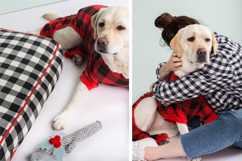 Winnie shows off a plaid dog bed and buffalo check sweater