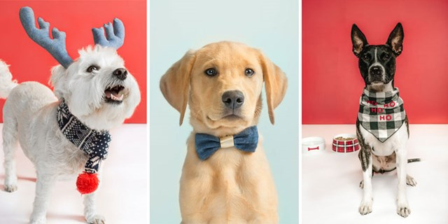 Three cute dogs show off new Wit & Delight holiday pet accessories
