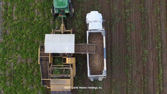 aerial view of potatoes being harvested