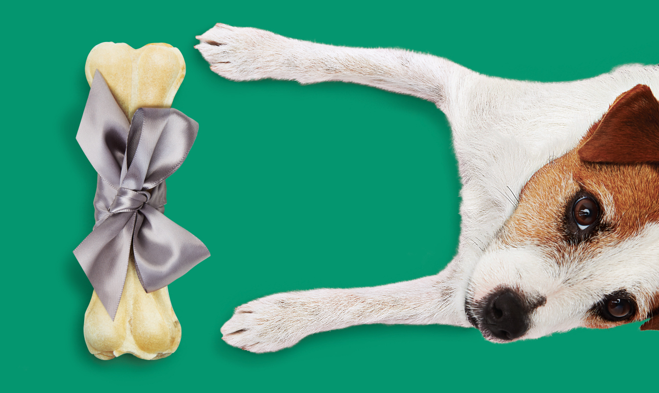 A dog and a bone wrapped in a silver ribbon against a green background